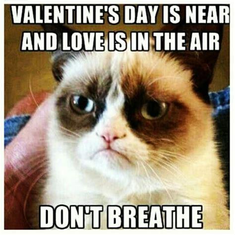 Grumpy Cat Meme Valentines Day - grumpy cat lol grumpy cat pinterest