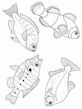 Fish Coloring Pages Fun Fishing Different Sea sketch template