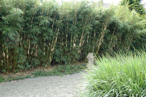 Schnellwachsende Heckenpflanzen
