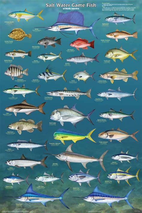 salt water game fish poster