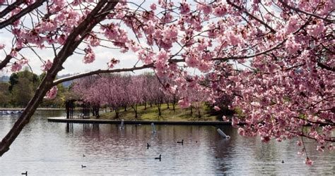 lake balboa anthony  beilenson park city  los