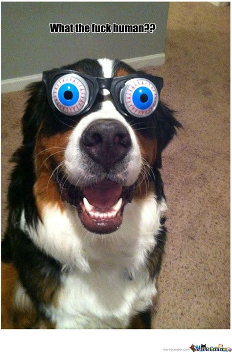 Surprised Meme - surprised dog memes image memes at relatably com