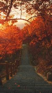 Fb Backgrounds Iphone Orange Fall Nature Autumn Warm Seasons Cozy Leaves