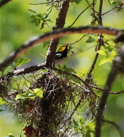 Texas Endangered Species Birds