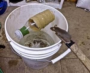 Piege à Rat Efficace : je d teste les rats et les souris voici un pi ge efficace ~ Dailycaller-alerts.com Idées de Décoration
