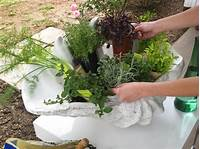 potted herb garden Create a Stunning Herb Container Garden | HGTV