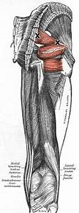 Piriformis Trigger Point Referral Patterns