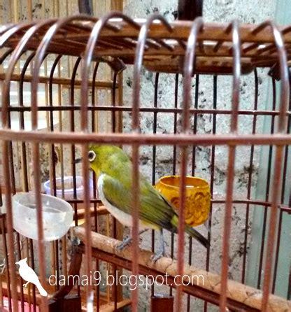Apa Yang Di Tulis D Lop Coklat Saat Melamar Kerja by Jenis Burung Yang Paling Trend Saat Ini Awal