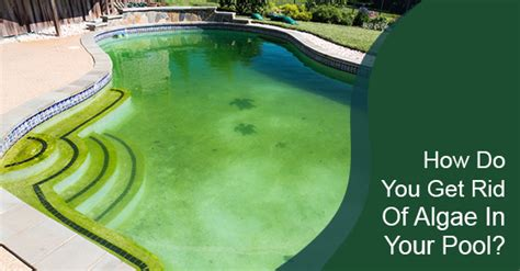 how do you get rid of algae in your pool pools