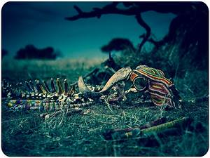 Wildebeest Skeleton