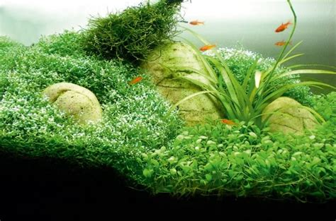 Small Tank Aquascaping by How To Aquascape Small Tanks Practical Fishkeeping