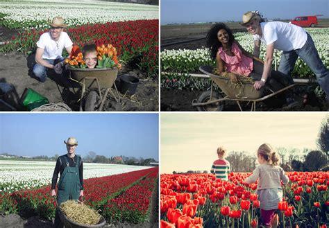 Upick, Il Primo Campo Di Tulipani In Italia  My Best