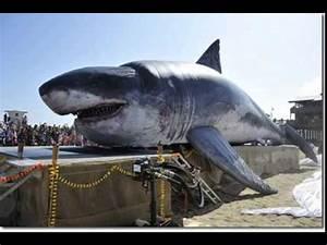 WORLD'S BIGGEST SHARK CAUGHT ON CAMERA AUSTRALIA 2015 ...