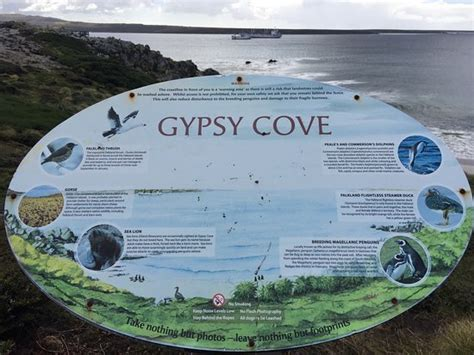 Gypsy Cove by Gypsy Cove Stanley Falkland Islands Top Tips Before