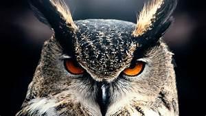 wallpaper owl 4k hd wallpaper nature gray