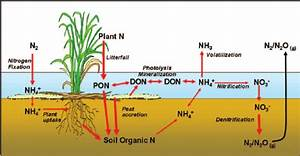 Schematic Diagram Of Nitrogen Cycle Processes In Wetland