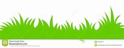 Erba Gras Trawa Herbe Grass Vettore Dell