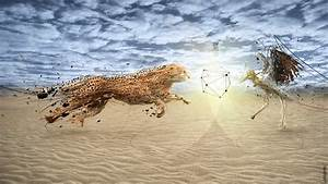 Cheetah Fight Wallpapers | HD Wallpapers | ID #13247