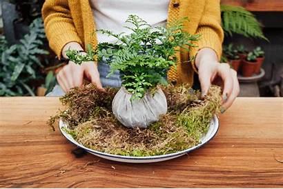 Kokedama String Garden Diy Tutorial Moss Ball