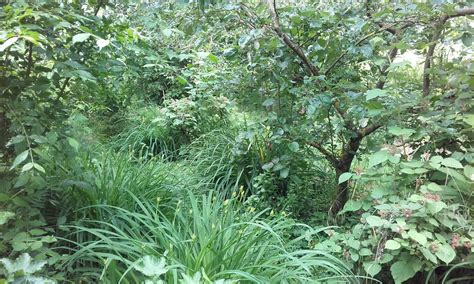 Wohnung Mit Garten Wels Land by 214 Sterreichisches Waldgarten Institut In Wels Gegr 252 Ndet
