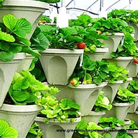 Vertical Gardening Strawberries by Vertical Gardening Systems Hydroponic Strawberry