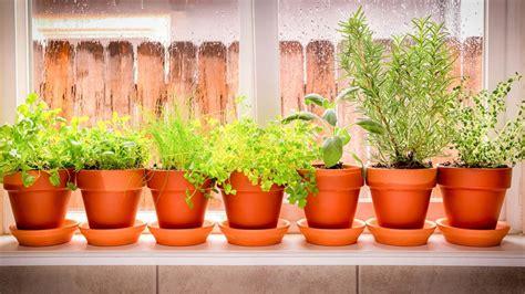 the secret to growing herbs indoors realtor 174