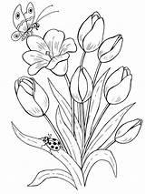 Coloring Tulip Flower Flowers Printable Tulips sketch template