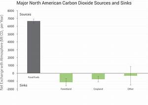Diagram Carbon Sources And Sinks