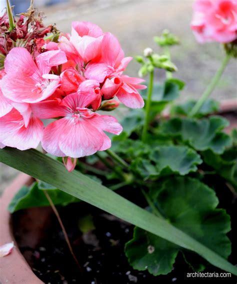 memilih jenis tanaman bunga  dekorasi interior