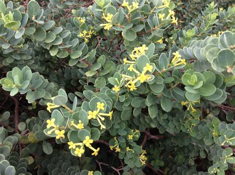 The Weatherproof Warriors 5 Native Plants For Your
