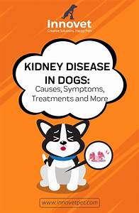 What Causes Kidney Failure In Dogs