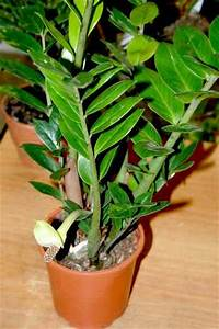 Pflanzen Wenig Licht : pflanzen die wenig licht brauchen frag mutti forum ~ Lizthompson.info Haus und Dekorationen