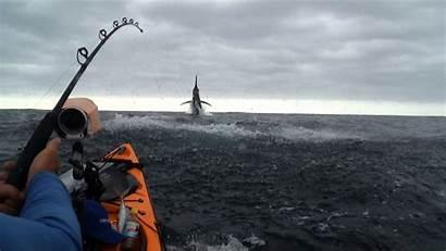Kayak Fishing Wallpapers Theme Marlin Australia Desktop