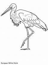 Stork Coloring Designlooter Template Drawings sketch template