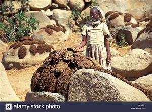 Drying of cow dung for cooking use, Tigray, Ethiopia Stock ...