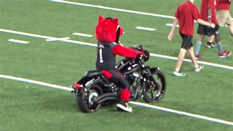 Arkansas State Mascot Howl Riding His Motorcycle