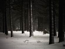 """""""DARK WINTER"""" - About the Exercise Th?id=OIP"""