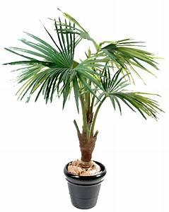 Pot De Fleur Transparent : palmier en pot ~ Teatrodelosmanantiales.com Idées de Décoration