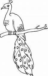 Peacock Coloring Pages Drawing Sheet Printable Easy Perched Peacocks Bird Animal Lineart Template Adult Sheets Supercoloring Grinch Birds Clipart Getdrawings sketch template