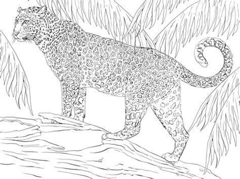 jaguar coloring page supercoloringcom