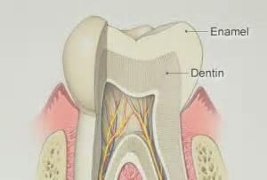 top  foods  drinks  strengthen tooth enamel