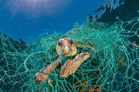 For Animals, Plastic Is Turning The Ocean Into A Minefield