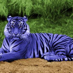 myth   maltese tiger  world  chinese