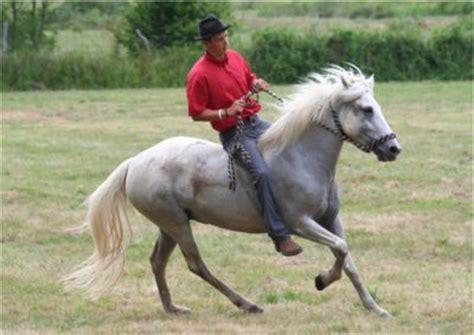monter comme un cheval la monte 224 cru mon cheval et moi yaaah