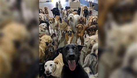 dog selfie daycare going newshub pets