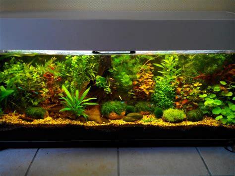 besoin d aide pour un aquarium de 300l en aquascaping ou hollandais