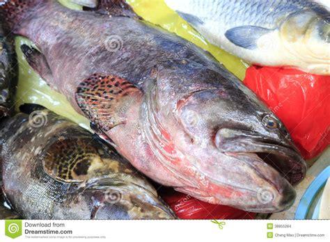 grouper fish fresh market
