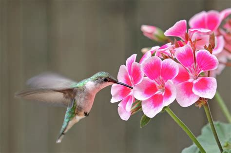 hummingbird symbolize  answer  mystifying