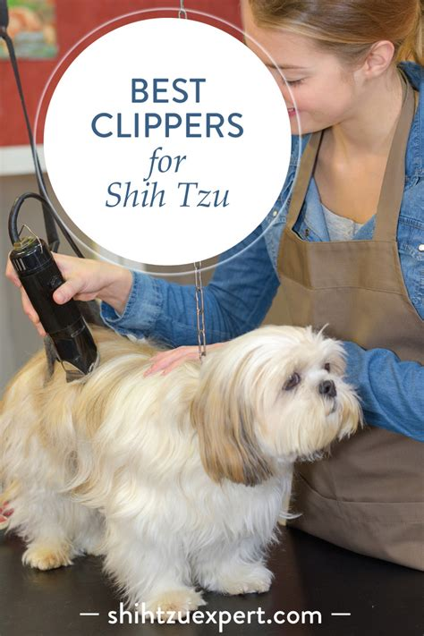 top   dog clippers  shih tzu november  andis oster