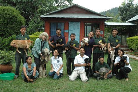 home ngos kathmandu animal treatment centre
